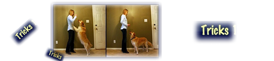 App: Dog Tricks & Sound Machine