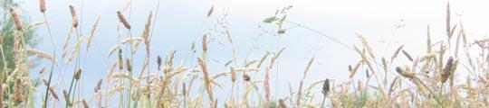 'Hooikoorts Alarm' waarschuwt voor pollen