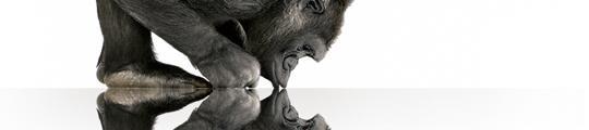 Apple's Gorilla Glass is een feit