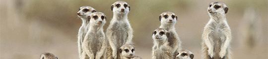 De 4 leukste dierendag apps