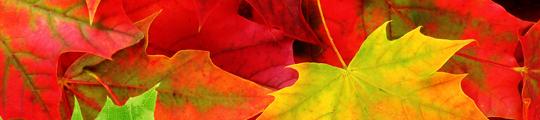 3 leuke herfstwandeling apps