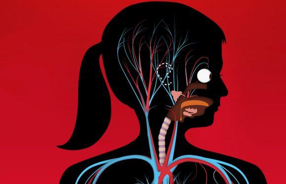 4 apps om het menselijk lichaam te leren kennen