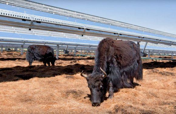 Apple krijgt toestemming om zonne-energie te verkopen