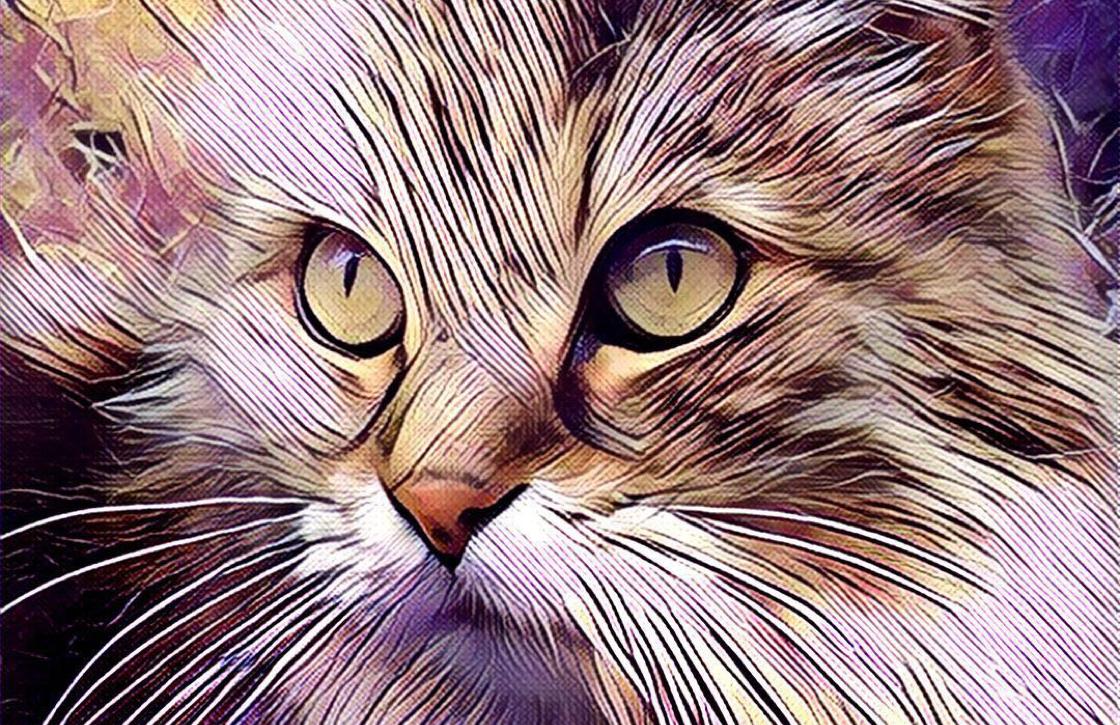Prisma feed toont afbeeldingen die dichtbij gemaakt zijn
