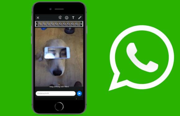 Uitleg: zo zoek, bewerk en stuur je WhatsApp-gifs