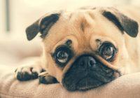 Google Foto's voegt herkenning van huisdieren toe aan app