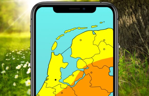 Met deze 4 hooikoorts-apps ben je klaar voor het pollenseizoen