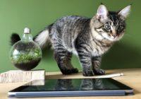 9 apps en tips voor een beregezellige dierendag