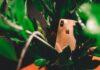 10 verborgen iPhone-functies die je nog niet kent (+ video)